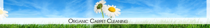 Carpet Cleaning Brooklyn